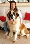Prize-winning St Bernard dashes from Crufts-style show to save his dying collie mate with a canine blood transfusion